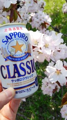 桜とサッポロクラシック