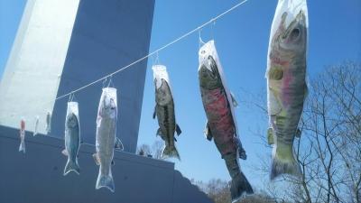 鯉のぼりならぬ鮭のぼり