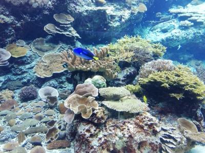 珊瑚の勉強もしました