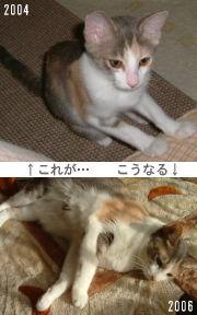仔猫と成長