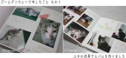 ユキたん成長アルバム