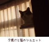 猫と夕焼け