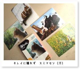 岩合さんのポストカード&本