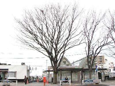 トイレの前の志村けんの木