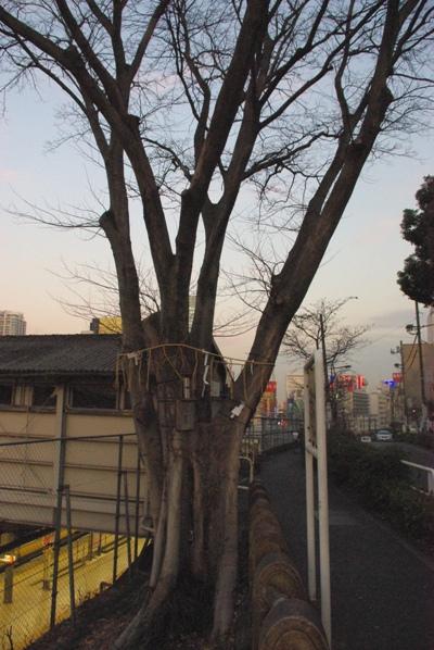 太田姫神社旧社地1