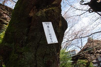 靖国神社20070327-6