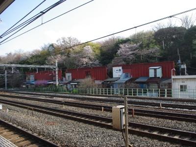 王子桜新道20100410-6