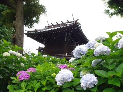 白山神社20100620-5