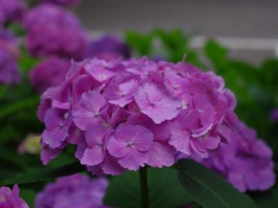 白山神社20100620-7