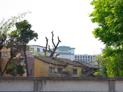 夏目坂20100501-3