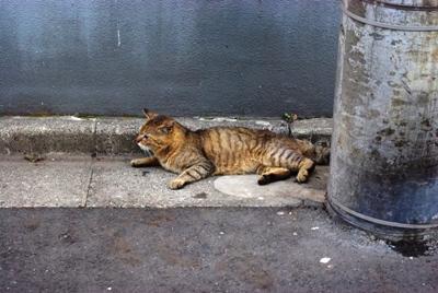 ジジババの店の前の猫