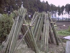 竹の杭製作
