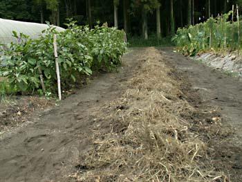 冬野菜不耕起畝