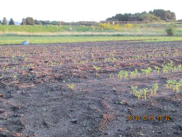 鳴海畑と玉利畑の比較。