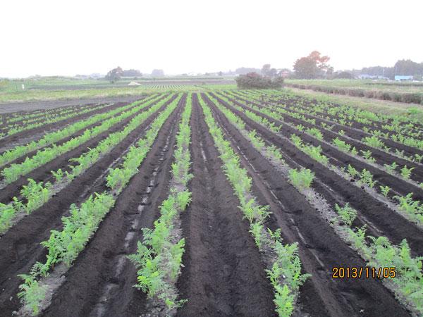 9月9日が2回の撒き直しとなった玉利畑
