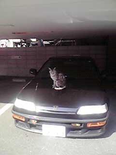 駐車中の上のネコ