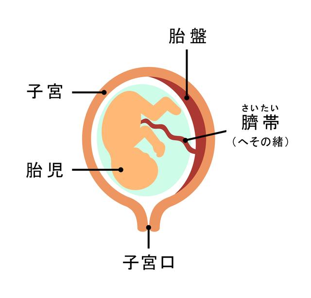 代理出産の費用