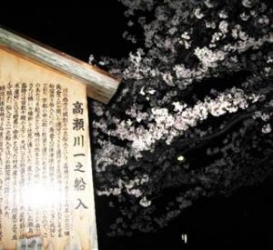 高瀬川の夜桜