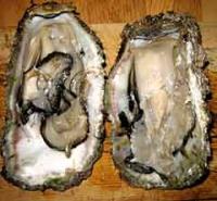 開いた岩牡蠣