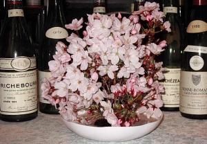 2010 花見の桜