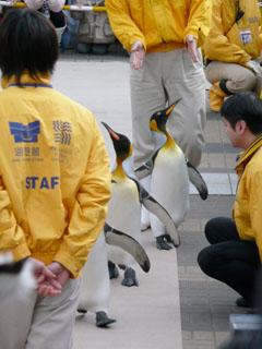 080114-ペンギンパレード.jpg
