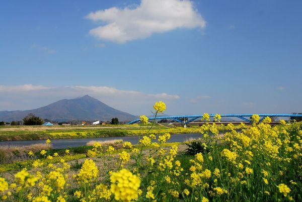 菜の花咲く大谷川