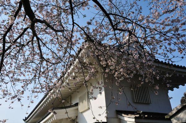 今年の桜は切ない