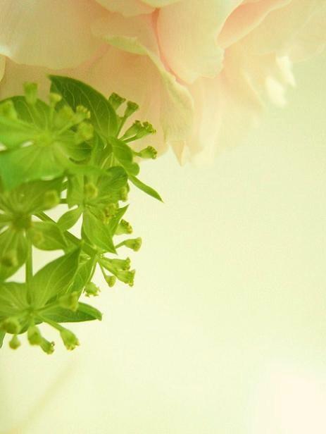 呼びあい混ざりあうピンクと緑