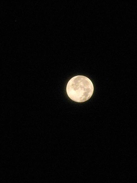 今日は満月です
