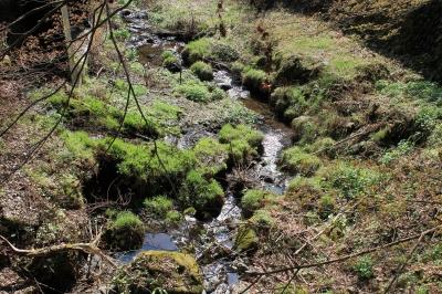登山道入り口の川