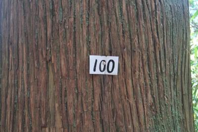 キリ番100