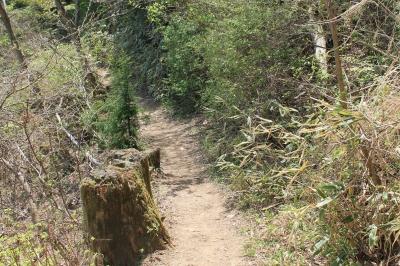 惣岳山への道のり