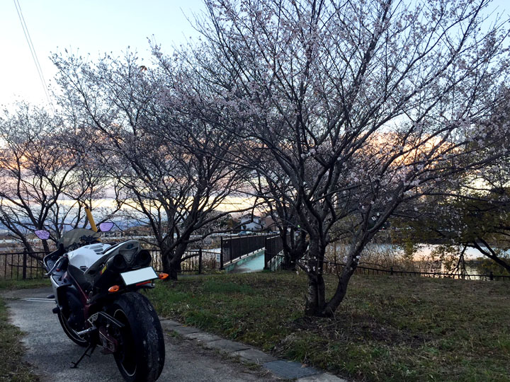 sikizakura02.jpg
