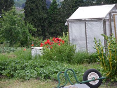 Bath 畑のお花 アロットメント
