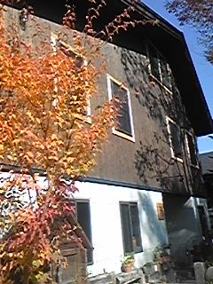 ウリカエデの紅葉