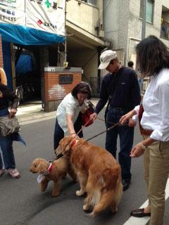 浅草神社三社祭2013犬たちも参加