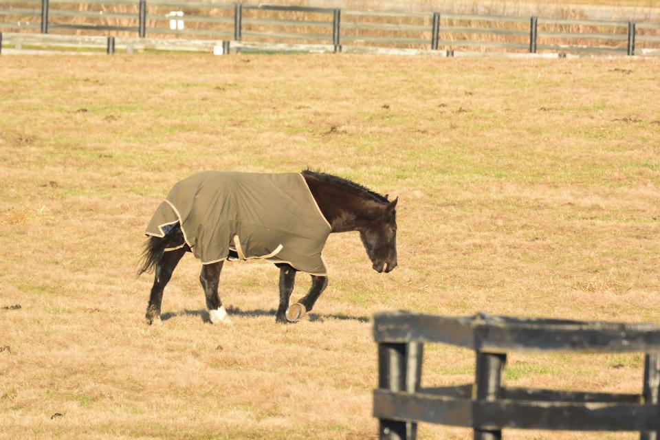 ケンタッキーホースパーク馬写真