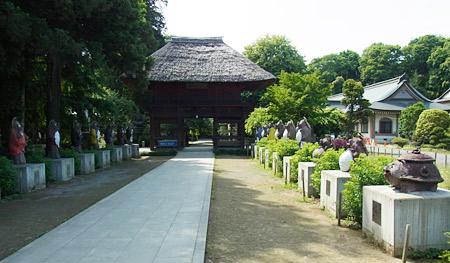 茂林寺たぬき