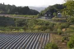 八塔寺の田園風景