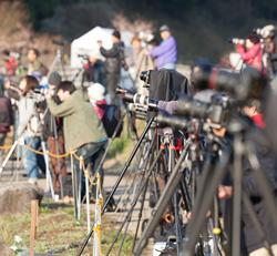又兵衛桜を狙うカメラマン