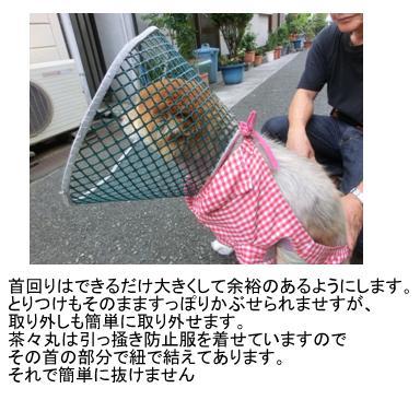 20110727_2191750.jpg