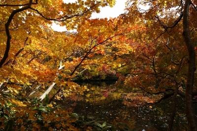鳥海山北麓善神沼に映える紅葉
