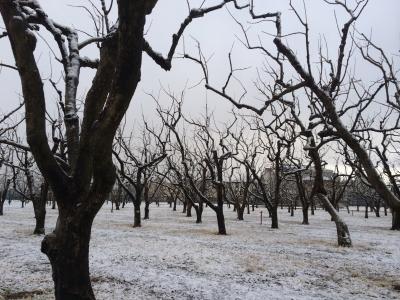 2月4日雪畑