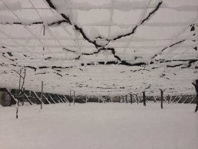 雪の葡萄園