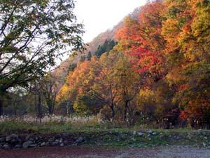 大源太湖周辺の紅葉
