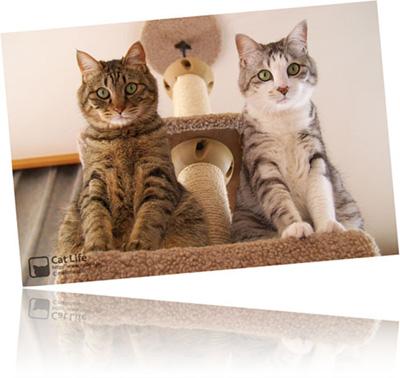 CatLife卓上カレンダー[2008年版]予約特典カード