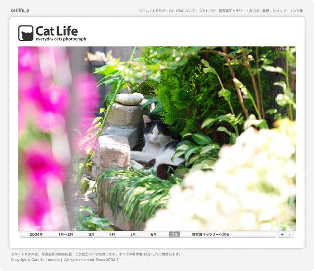 2004年7月の猫写真
