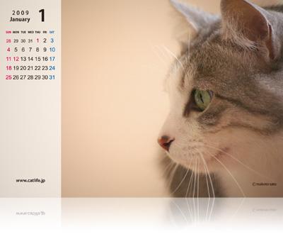 CatLife卓上カレンダー[2009年版]