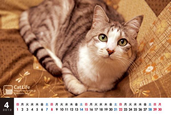 猫カレンダー2012