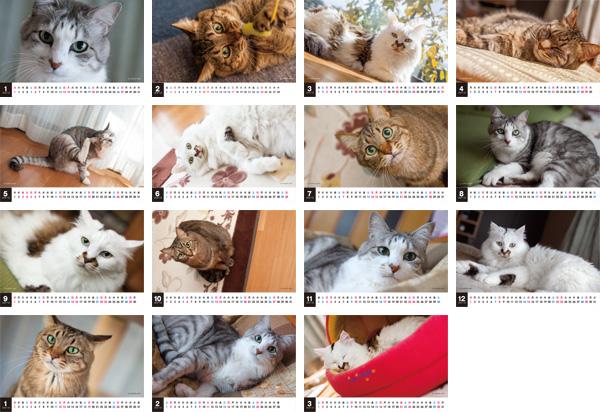 2013年CatLifeカレンダー